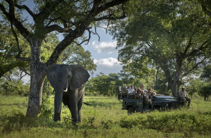 prywatne safari