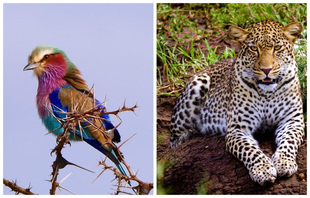 zwierzęta w parku serengeti