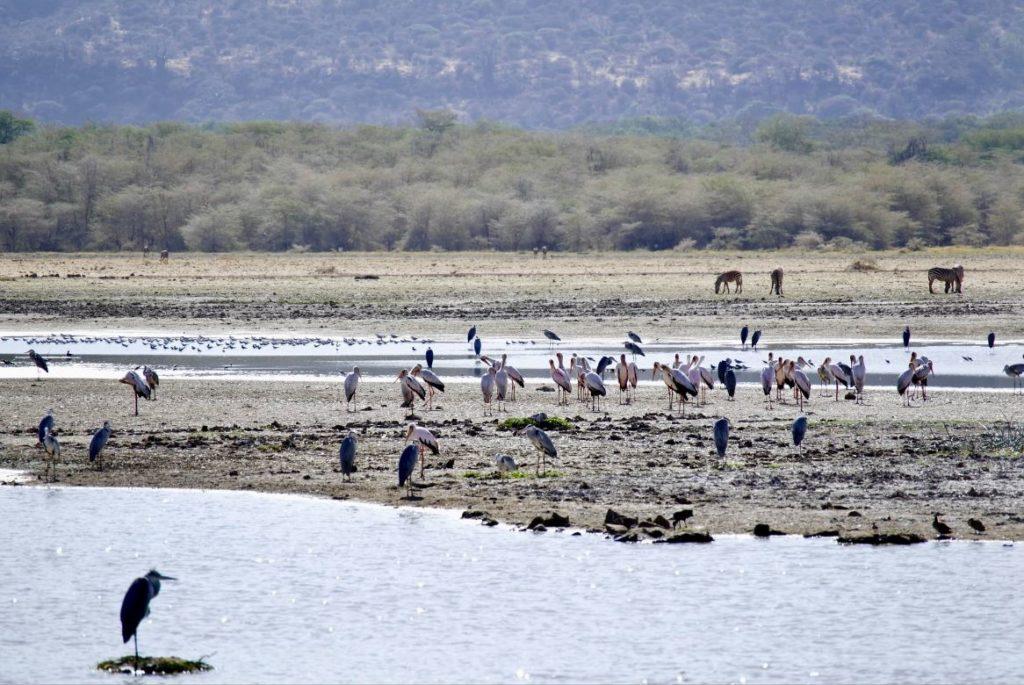 Jezioro manyara w Tanzanii