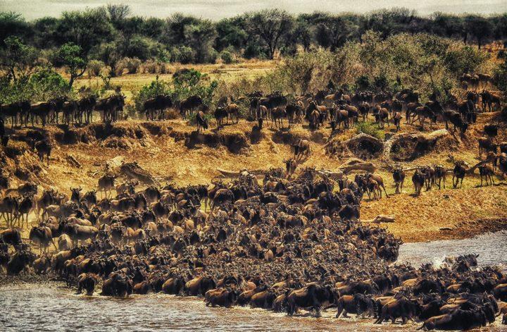 Coroczna Wielka Migracja w Serengeti- Tanzania z CARTER