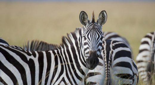 Tanzania i Zanzibar – Zupełne otwarcie granic!