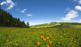 Mongolia Nart Nature Reserve
