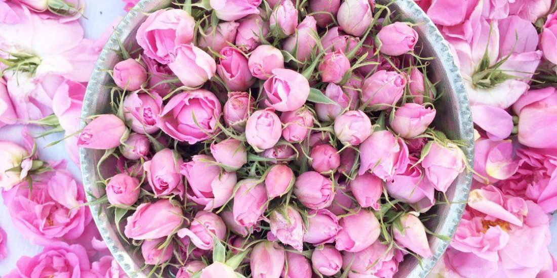 Pustynia, szafran i kwitnące róże