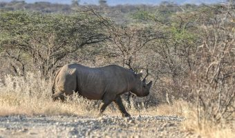 Saruni Rhino