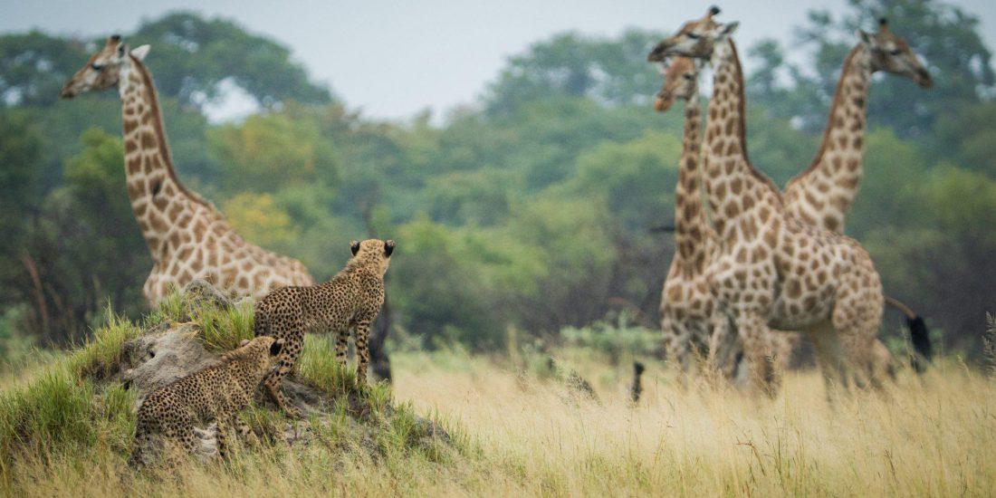 The Hide Safari Camp